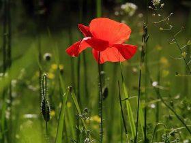 The Benefits of Installing Grow Lighting in Your Garden